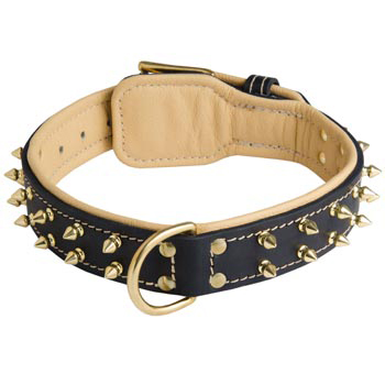 Leather Dog Collar Spiked Padded with Nappa Leather Adjustable