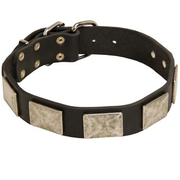 Walking Leather Dog Collar