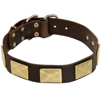 Leather Dog Collar with Fashionable Studs