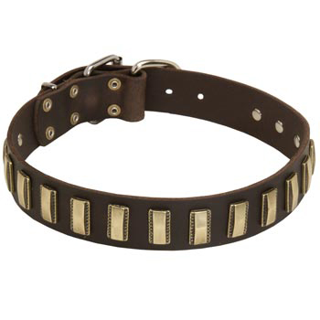 Leather Dog Collar Designer for Walking in Style