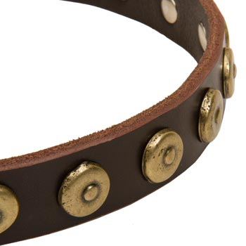 Dog Collar with Stylish Circles