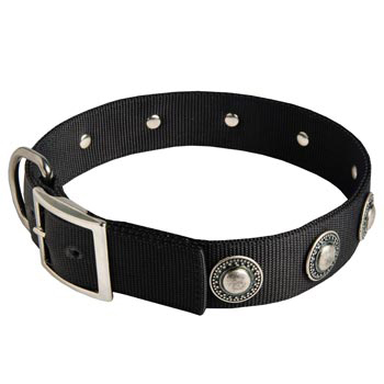 Dog Dog Nylon Collar Steel Nickel Plated Conchos