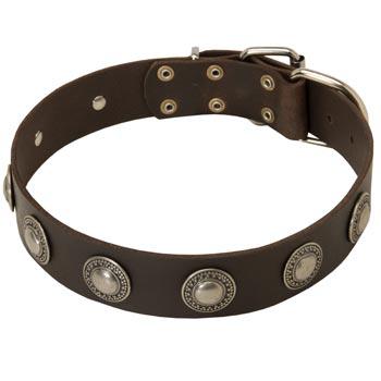 Training Leather  Dog Collar for Stylish Dogs