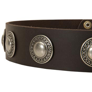 Leather Dog Collar with Conchos for 