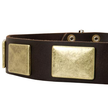 Leather Dog Collar with Massive Brass Plates