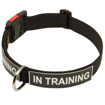 Nylon Dog Collar With ID Patches