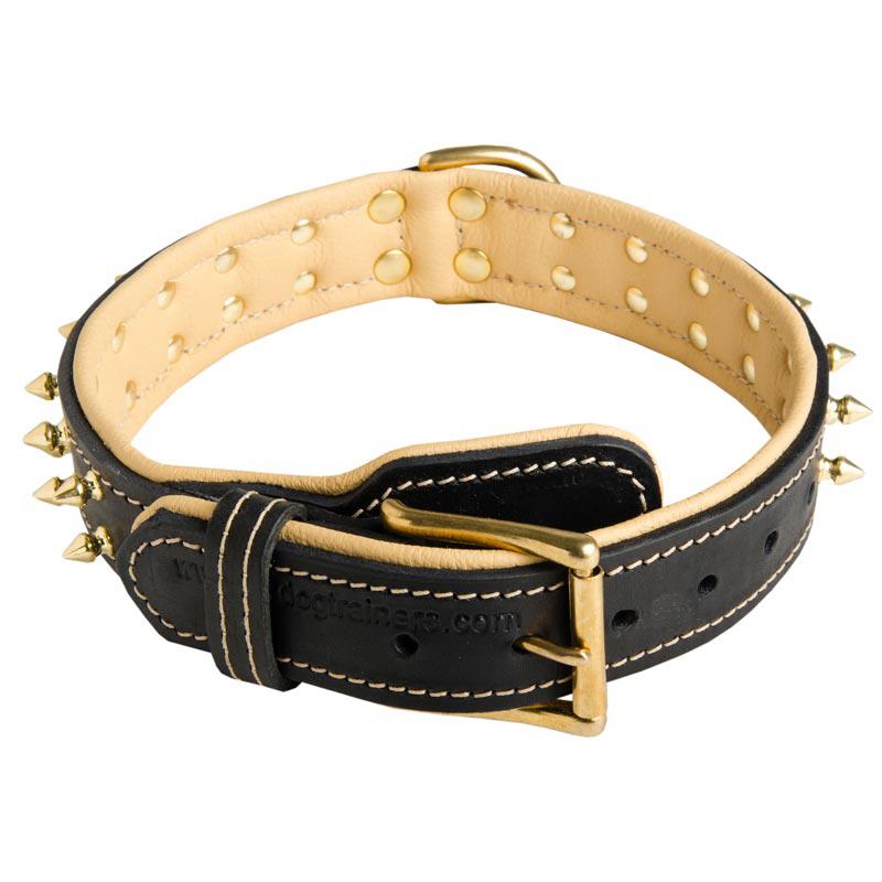 Why Buy Padded Dog Collar