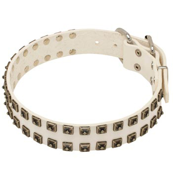 Studded White Leather Dog Collar for Dog