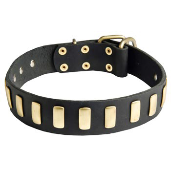 Dog Collar Leather with Brass Hardware